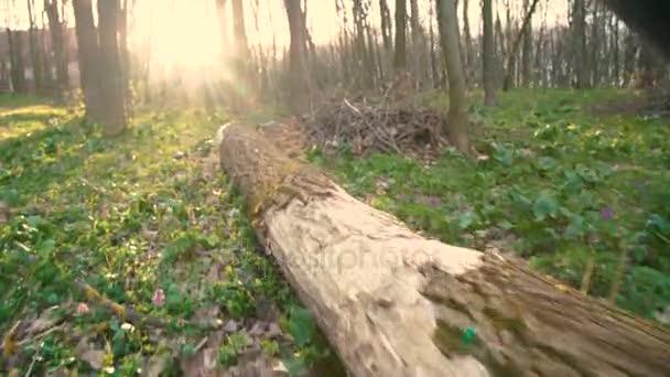 Zblízka pohled mans nohy běží v lese 4k