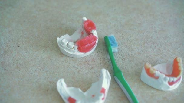 Modelle menschlicher Kiefer mit Zahnbürste am zahnärztlichen Arbeitsplatz in 4k