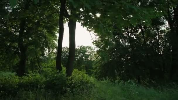 Green summer forest nature 4K