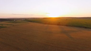 Aerial view of picturesque wheat fields in sunset. 4K