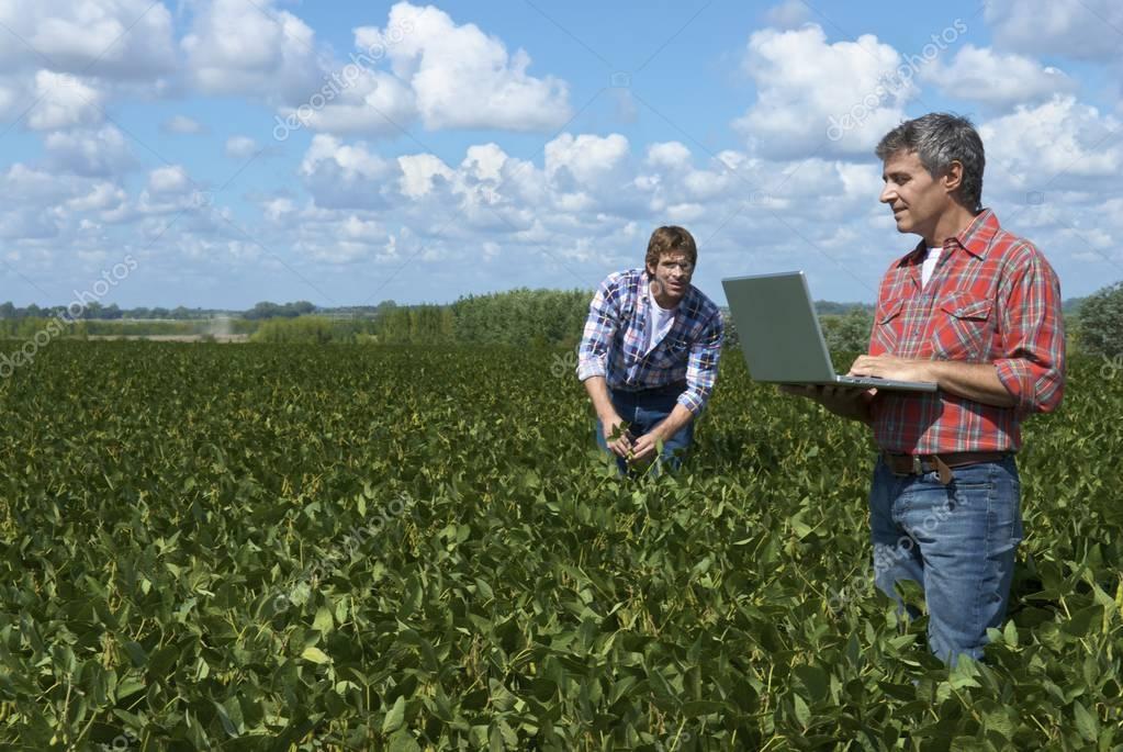 two men examining soybean field