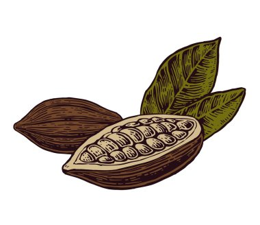 Leaves and fruits of cocoa beans.