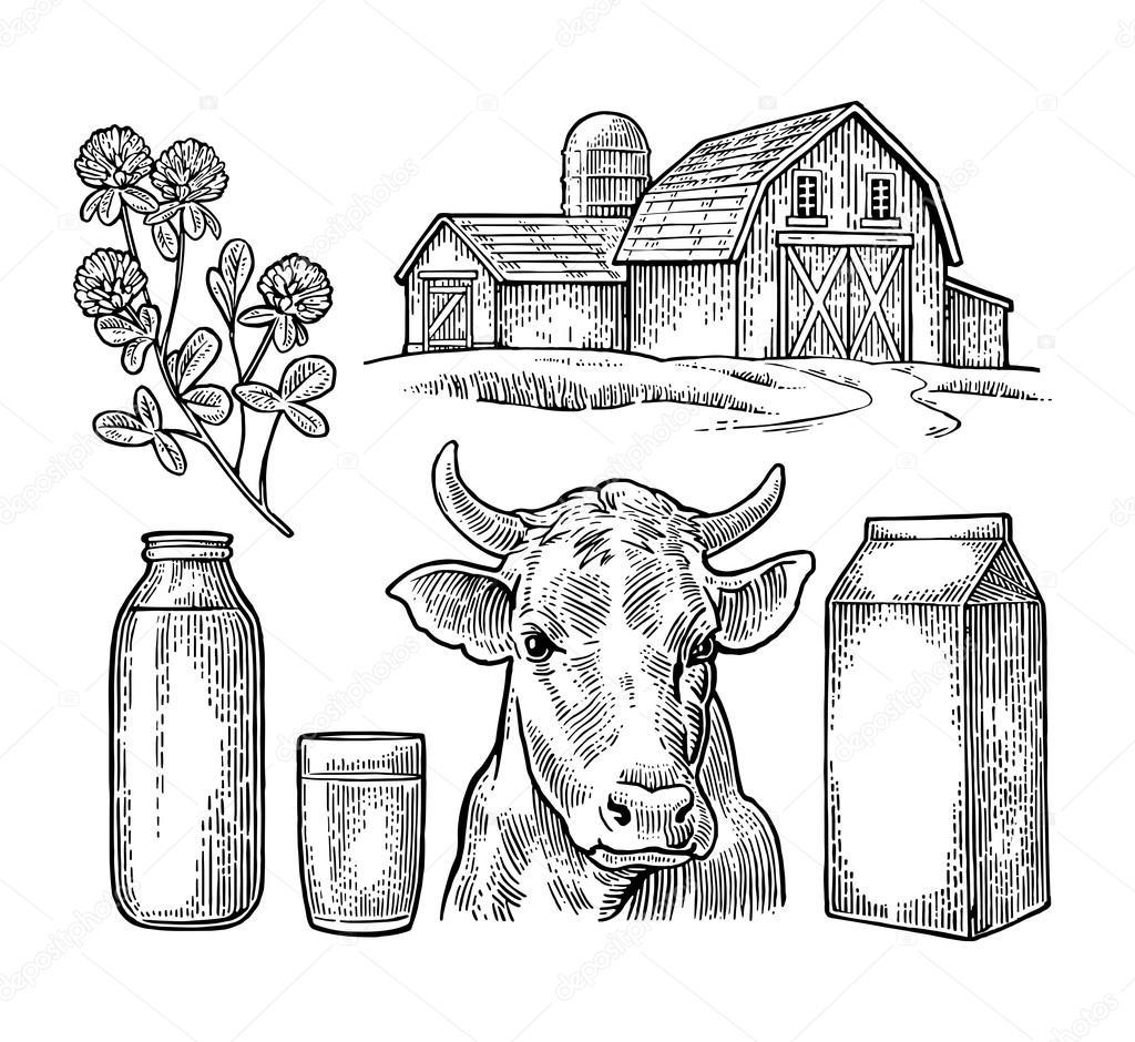 Set granja de leche. Cabeza de vaca, trébol, caja de cartón, vidrio ...