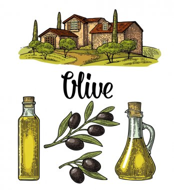 Set olive. Bottle and Jug glass of liquid with cork stopper and branch with leaves. Rural landscape with villa or farm with field, tree and cypress. Vector vintage color engraving on white background stock vector