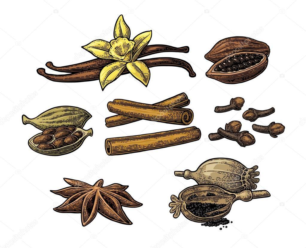 Set of spices. Anise, cinnamon, cocoa, vanilla, poppy
