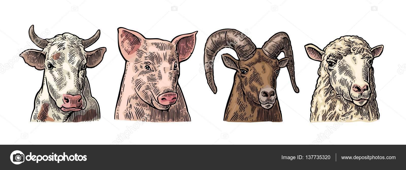 Insieme dell 39 icona di animali da fattoria teste di maiale for Piani di fattoria di 2000 piedi quadrati