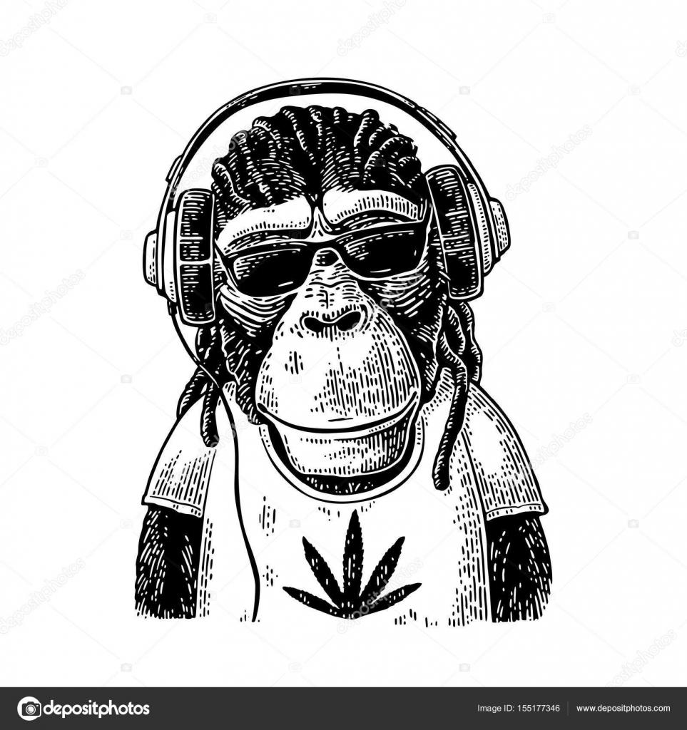 Monkey hipster with dreadlocks in headphones, sunglasses ...