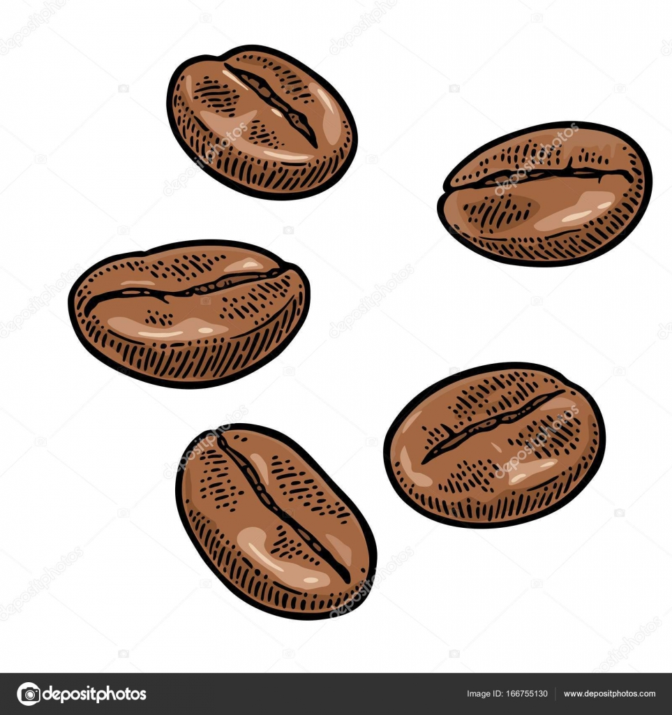 Coffee Beans Hand Drawn Sketch Style Vintage Vector Engraving