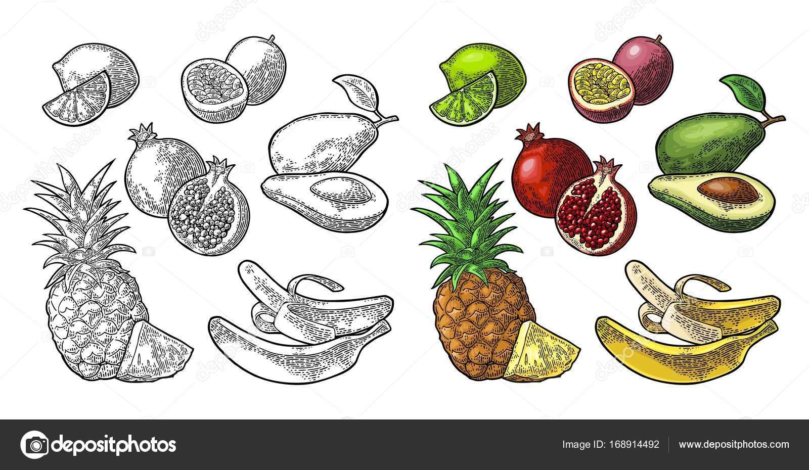 Set de frutas tropicales. Piña, limón, plátano, Granada, maracuya ...