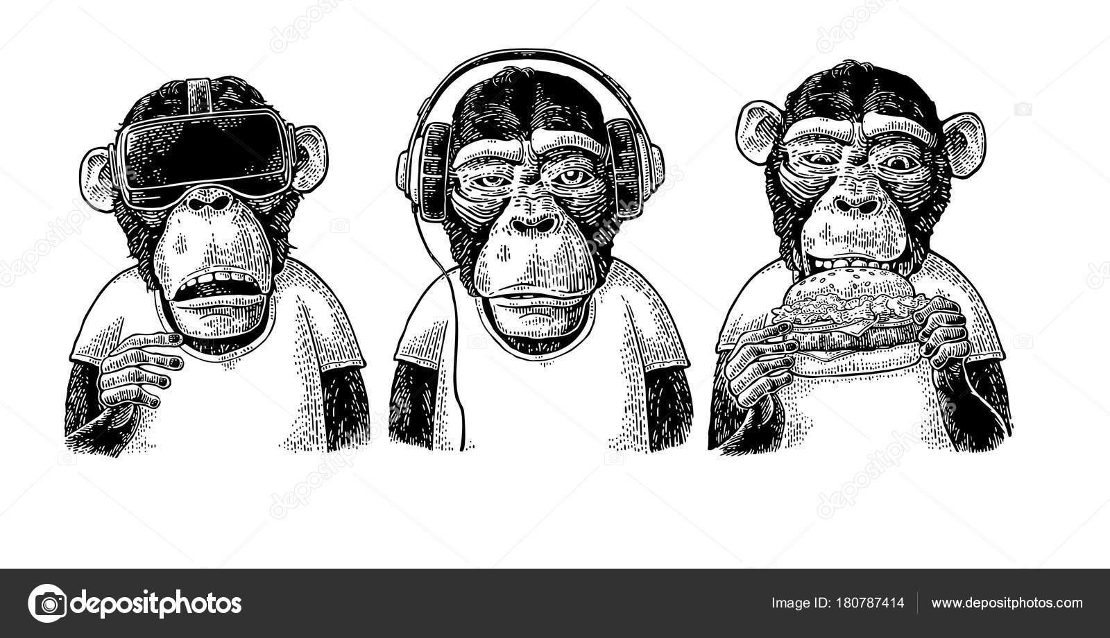 3 Monos Sabios Tatuajes vectores de stock de mono en camisa, ilustraciones de mono