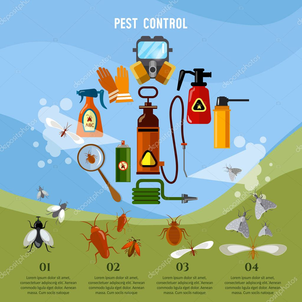 Pest control service infographic detecting exterminating insects