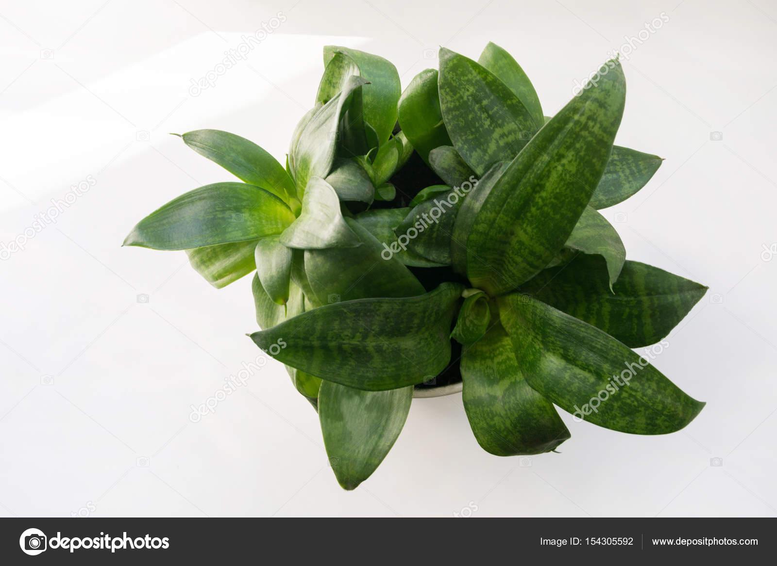 entretien plante succulente simple cliquez pour agrandir limage with entretien plante. Black Bedroom Furniture Sets. Home Design Ideas