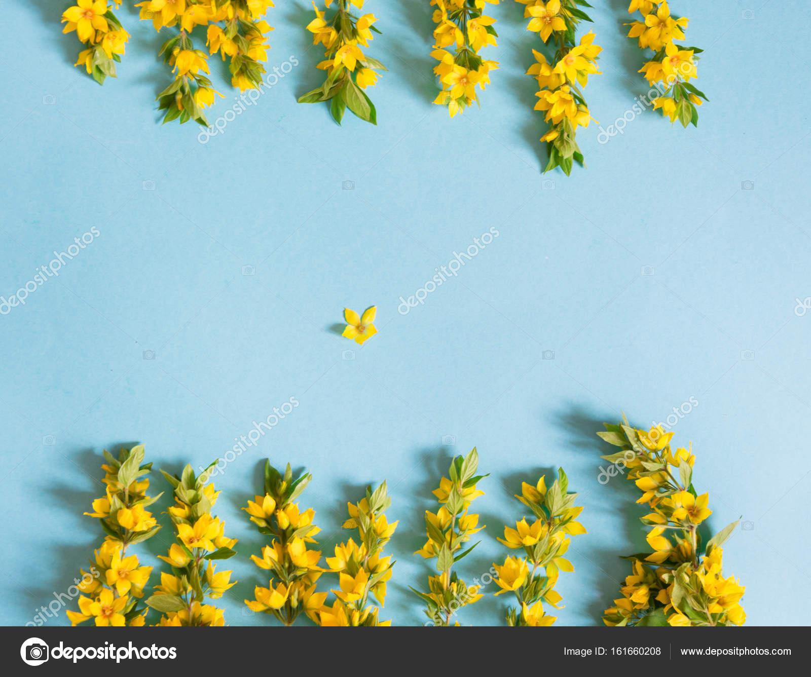 Festive Yellow Flower Arrangement Of Loosestrife Lysimachia On Blue