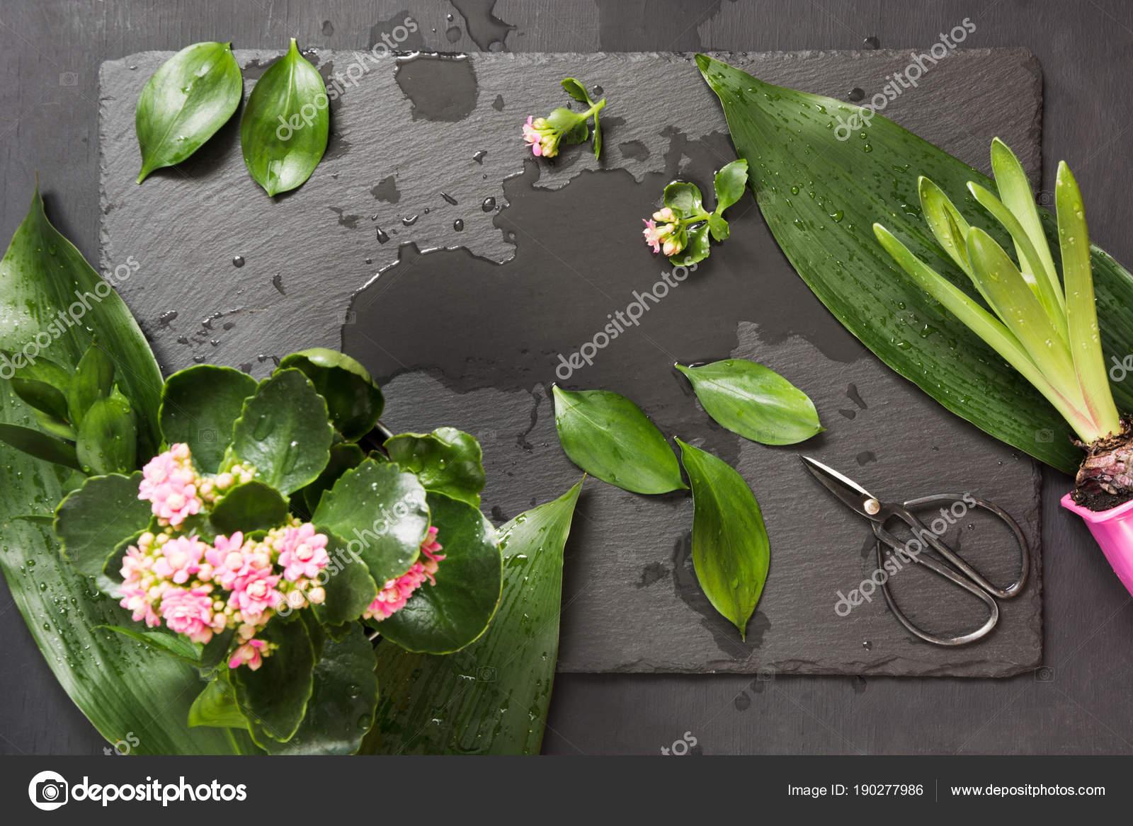 Hojas de color verde con unas tijeras de bonsai para florística ...