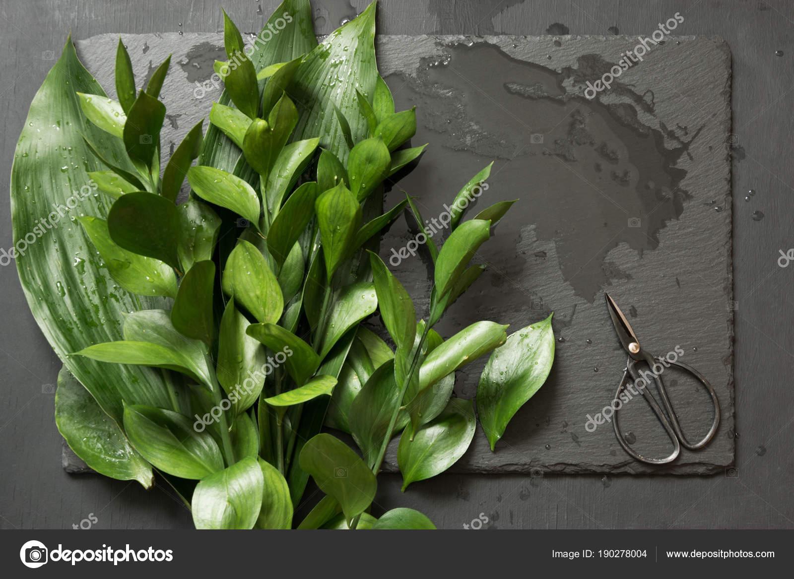 Mazzo Di Fiori Verdi.Green Leaves With Bonsai Scissors For Floristics On Wet Table