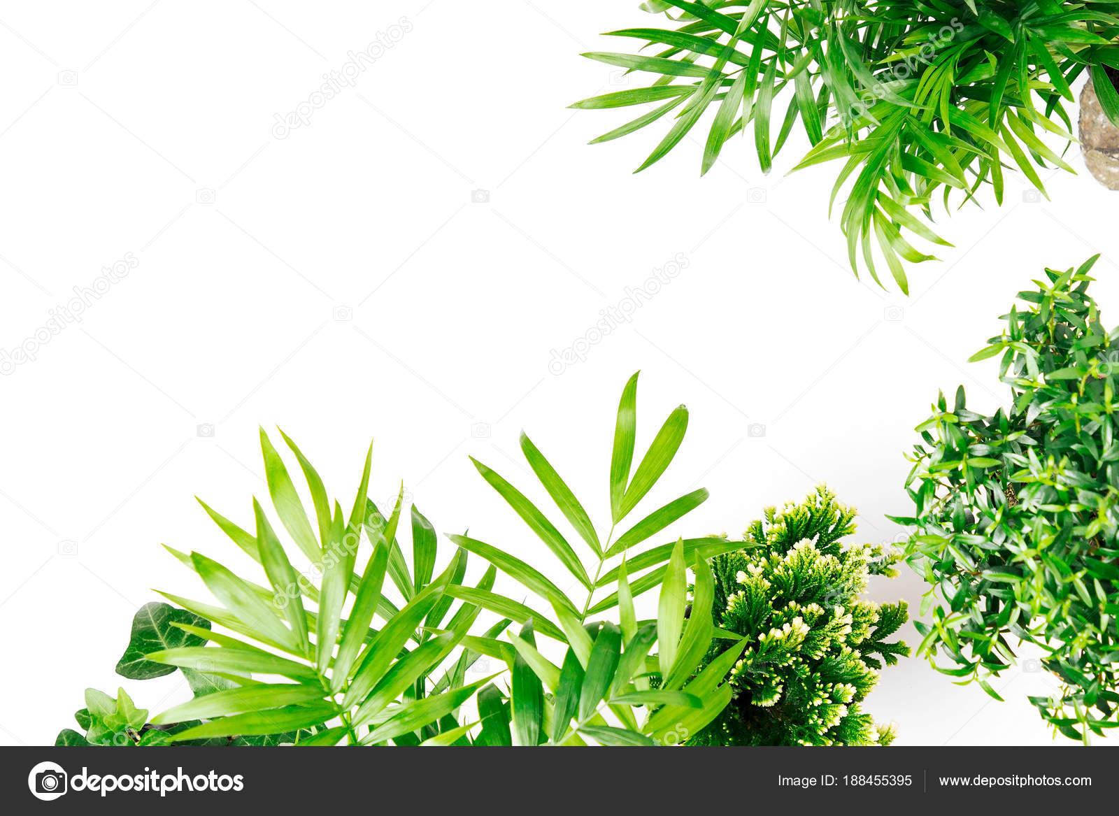 Tropische Blätter Und Pflanzen Auf Weißem Hintergrund Mit Platz Für ...