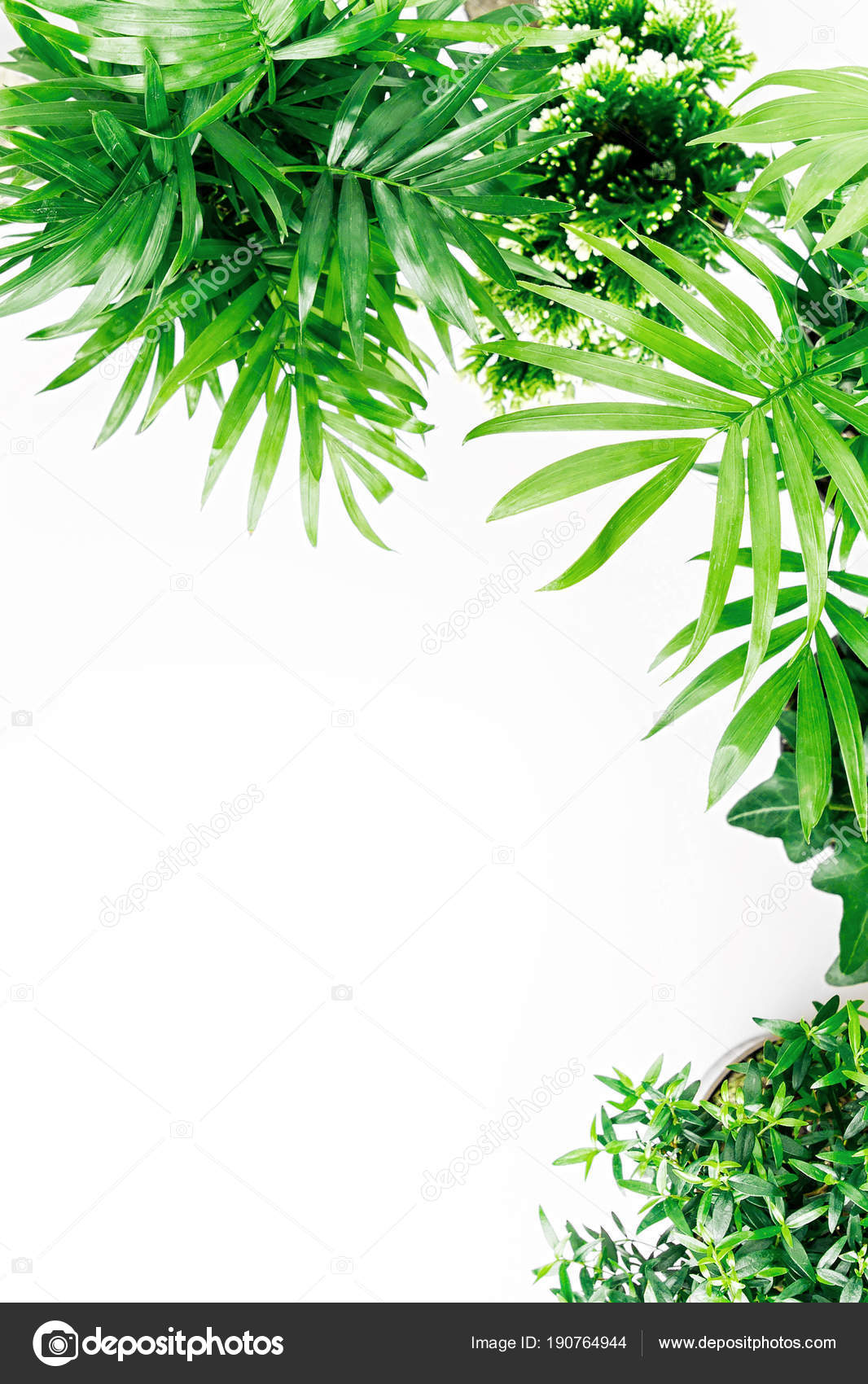 Tropical Leaves Plants Isolated White Background Stock Photo C Igishevamaria 190764944 Ferns, rubber fig trees and areca no matter how you choose to feature these stunning tropical leaves in your home, there's no doubt that you'll be able to transform your living room into a. https depositphotos com 190764944 stock photo tropical leaves plants isolated white html