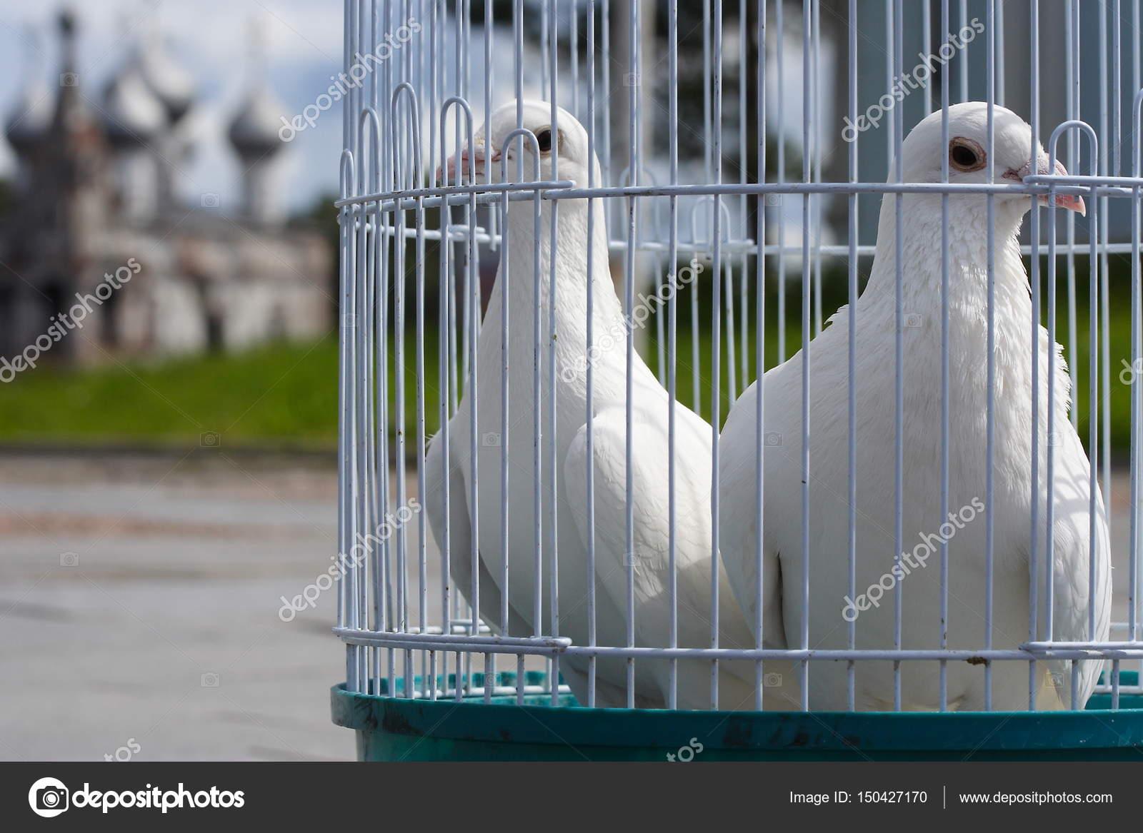 colombes blanches pour un mariage dans un oiseau de cage oiseaux blanc dans une cage. Black Bedroom Furniture Sets. Home Design Ideas