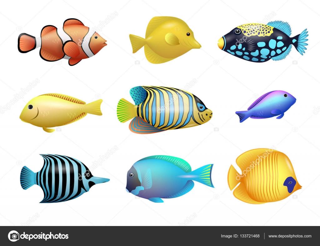 set di pesci tropicali vettoriali stock denisik11