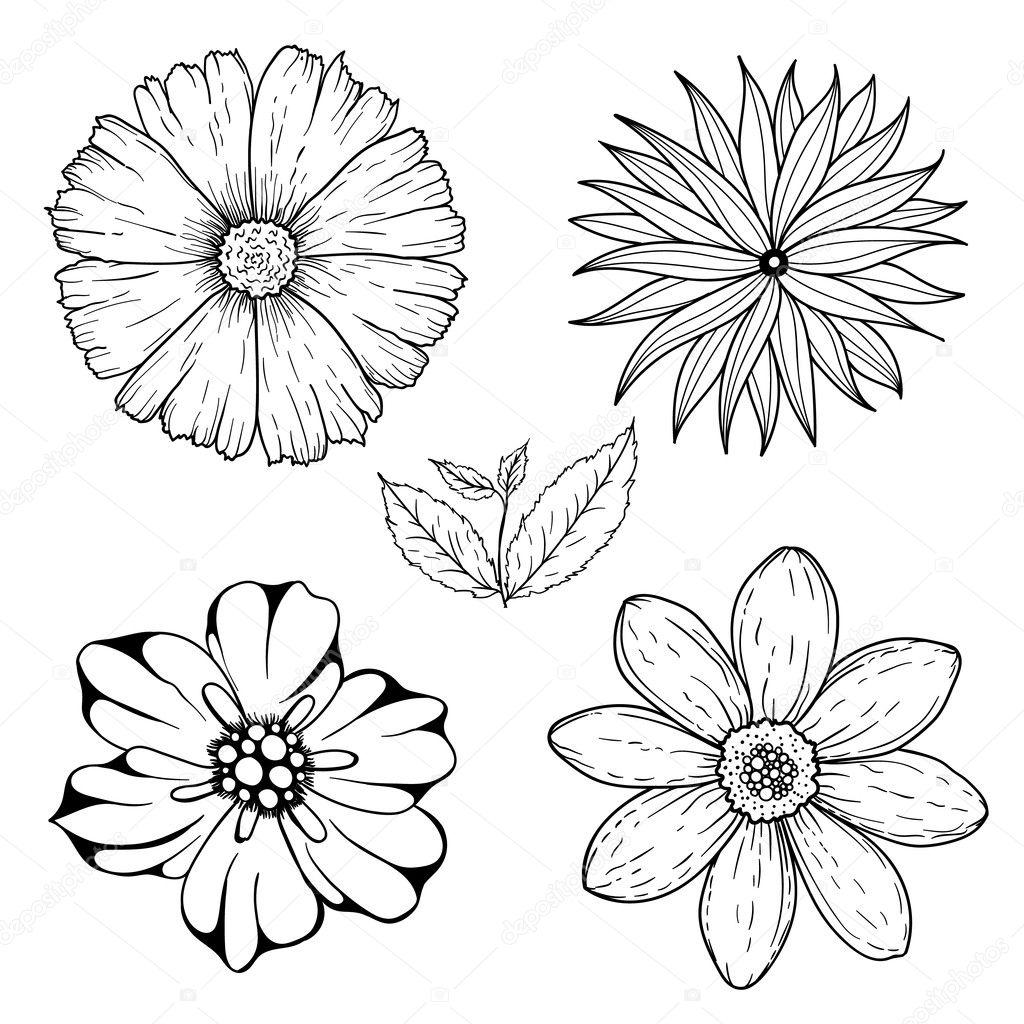 Vector Conjunto De Flores Incoloras Dibujado A Mano Y Hoja De La