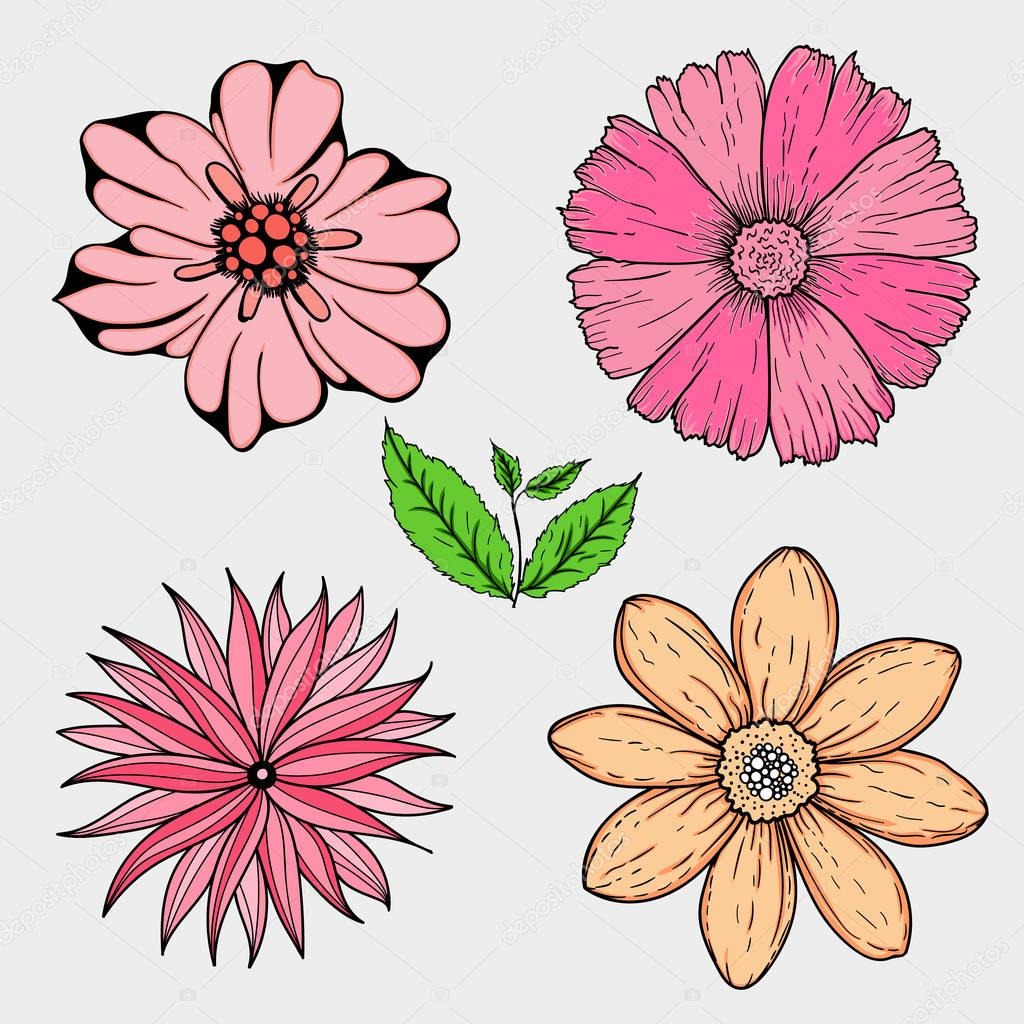 Vector Set Of Hand Drawn Colorful Flowers And Leaf Branch