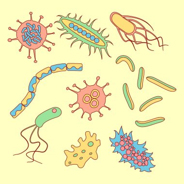different bacteria types