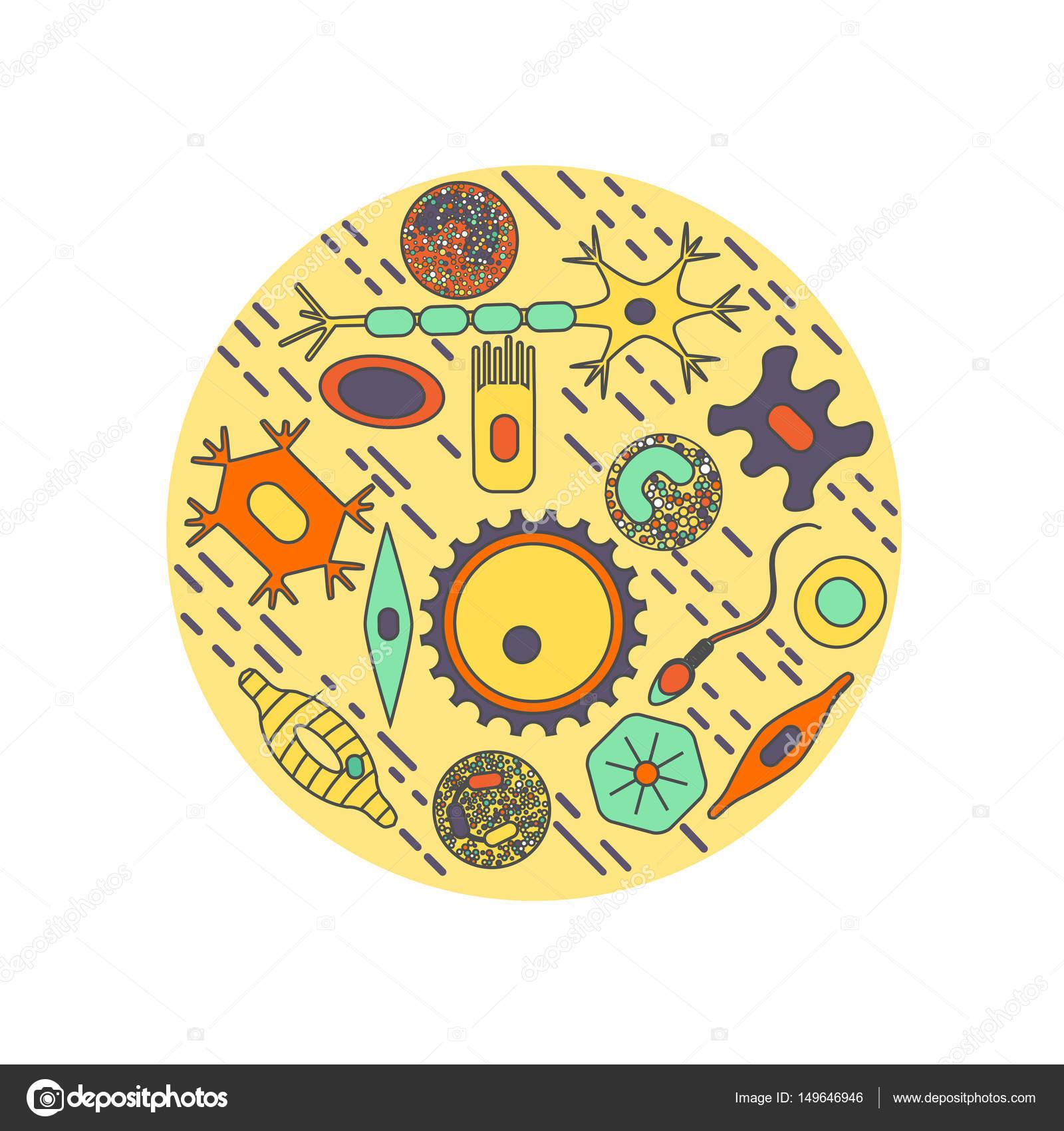 Extremamente tipos diferentes de células humanas — Vector de stock  AQ07