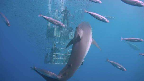 sea fish ocean underwater diving shark