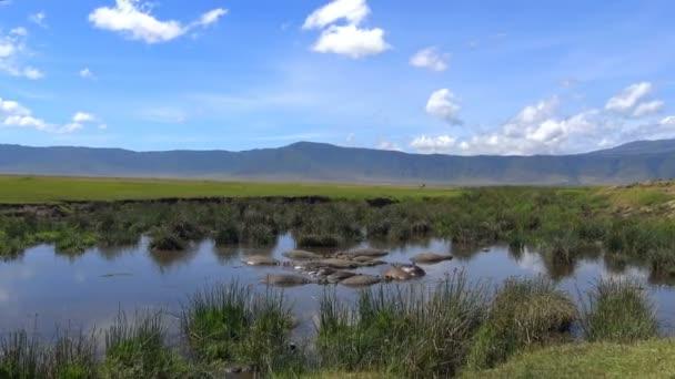 Nilpferde im See des Ngorongoro-Kraters. Safari - Reise durch die afrikanische Savanne. Tansania.