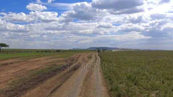 Una mandria di elefanti, zebre, GNU. Safari - viaggio attraverso la savana africana. Tanzania.