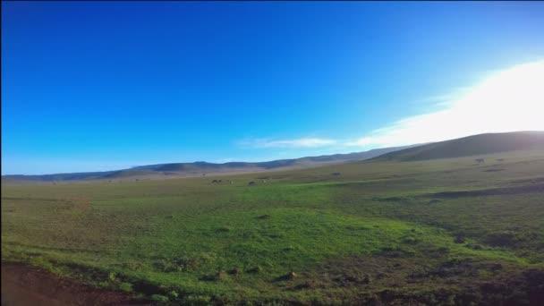 Zebre nel cratere di Ngorongoro. Safari - viaggio attraverso la savana africana. Tanzania.
