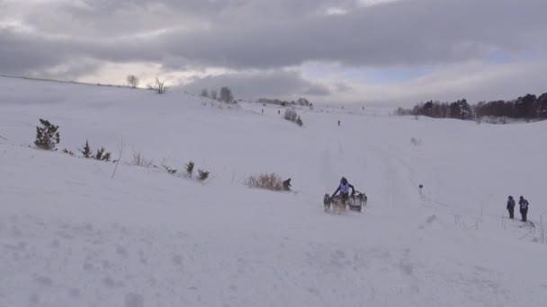 La gara di cani da slitta. Le montagne caucasiche. Russia