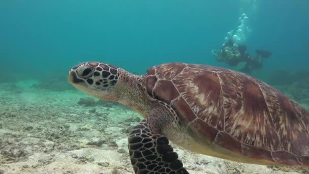 Tengeri teknős. Lenyűgöző víz alatti merülések a Fülöp-szigeteken.