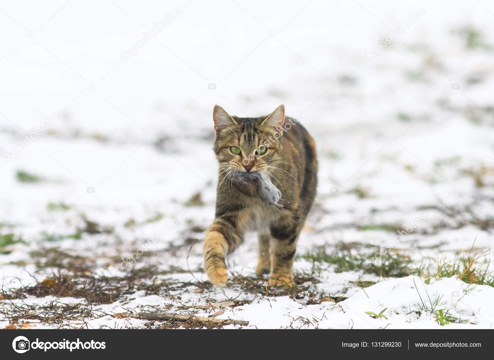 Кот и мышь смешные фото