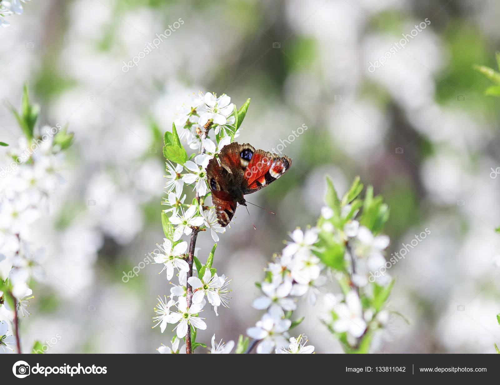 Paisajes Con Flores Y Mariposas Reales La Mariposa Del Ojo Del