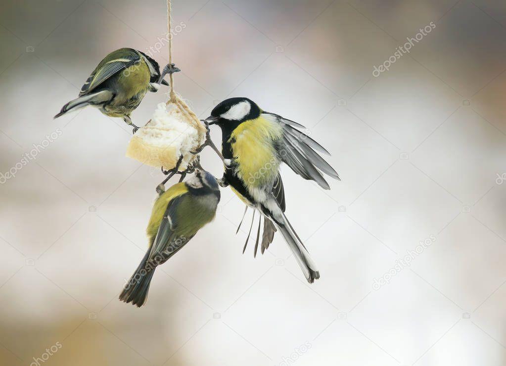 μεγάλα βυζιά μικρό πουλί