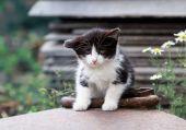 Fényképek éhes kis cica az utcán egyedül ül és néz ki a sa