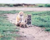 niedlichen Katzen auf einer grünen Wiese im zeitigen Frühling liegen und spielen g