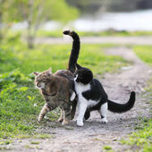 zwei lustige süße Katzen spielen auf einer grünen Wiese im zeitigen Frühling