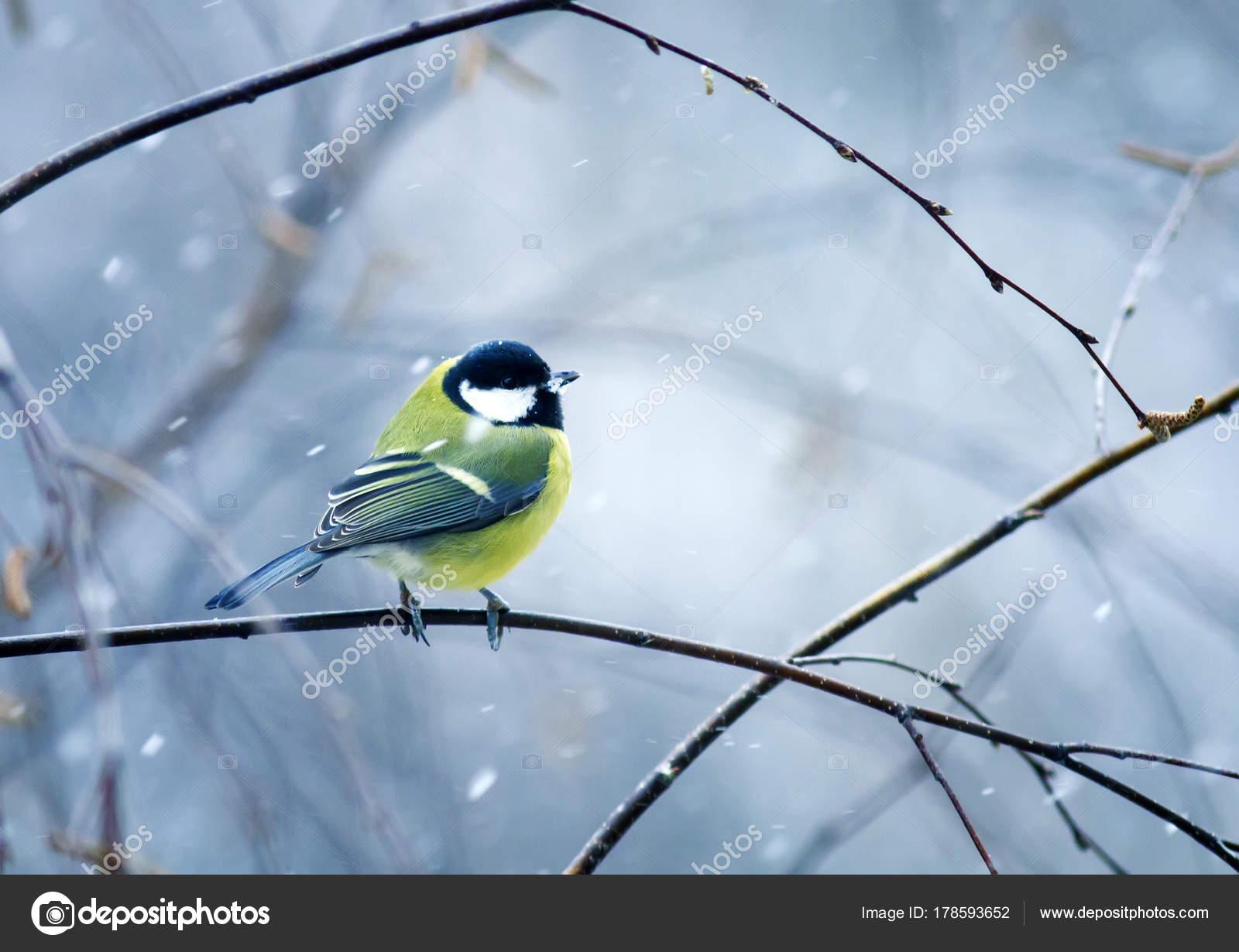 ωραίο πουλί ισοπικό πορνό
