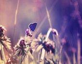 aranyos kis kék pillangó, ül egy finom és gyönyörű f