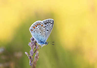 bright blue little butterfly sits on a floral gentle Sunny summe