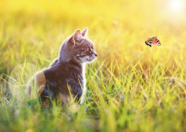 beautiful cat sits in the green grass on a Sunny meadow in the s
