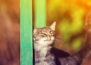 cute striped kitten rubs against a wooden beam in the yard in the Sunny spring garden closing his eyes with pleasure