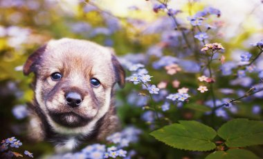cute brown puppy sitting on a green sunny meadow surrounded by b