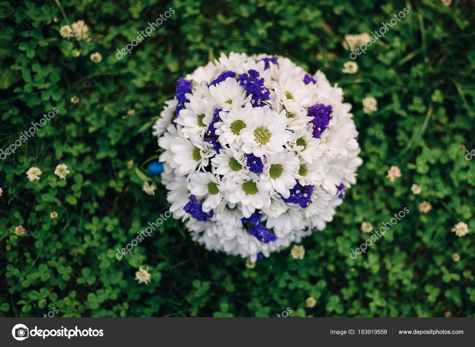 Wedding Bouquet Of White Daisies And Blue Flowers Stock Photo
