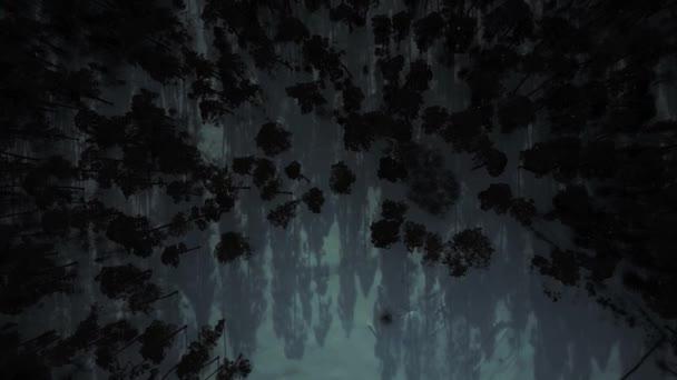 Légifelvételek. Titokzatos erdő, éjszakai és köd. Hold fény és árnyék fák
