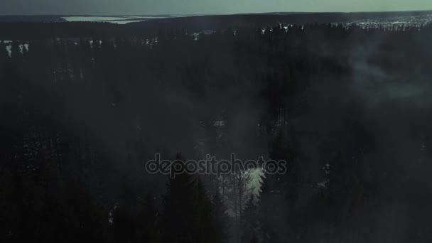 Letecký pohled. Tajemný les v noci a mlhy. Měsíc světlo a stín stromů.