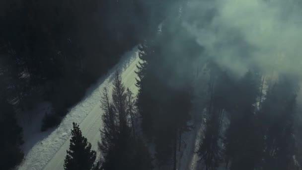 Letecký pohled. Tajemný les v noci a mlhy. Měsíc světlo a stín stromů