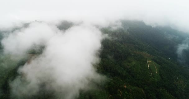AERIAL. Top view rice field through clouds